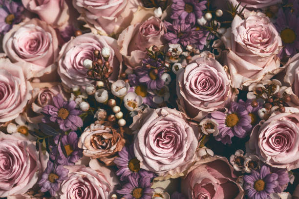 top shot of fading pink roses stock photo