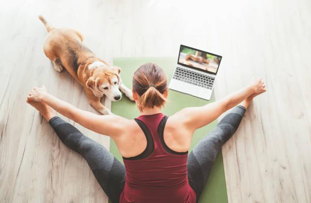 Vista superior en la mujer deportiva saludable se sentó en la estera en Upavistha Konasana pose, haciendo ejercicios de respiración, viendo la clase de yoga en línea en la computadora portátil. Su compañía de beagle dog keeping a la siguiente en el p - foto de stock