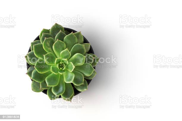 Top view cactus plant in pot isolate on white background picture id912881828?b=1&k=6&m=912881828&s=612x612&h=htjwpwiqiqopbl90ctpfq2ycskgk7x4bg0dg7kvquvc=