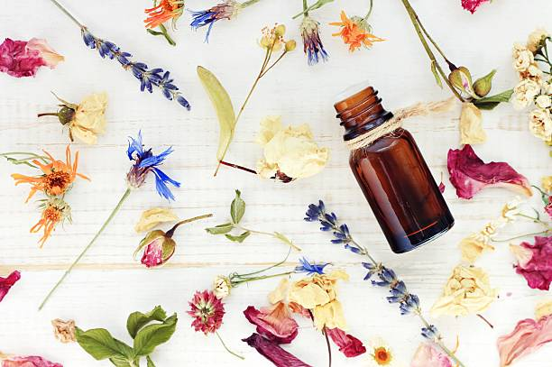 Top view dropper bottle among colourful dried flowers Aromatic essential oil. medicinal herbs gathering, scattered white wooden table.  dried plant stock pictures, royalty-free photos & images