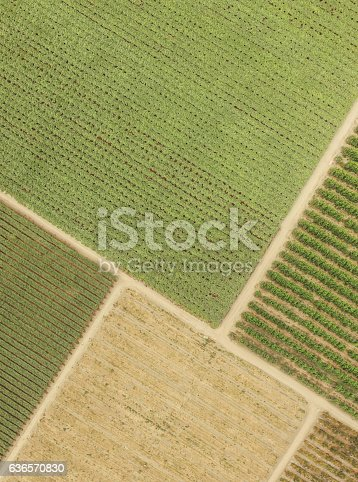 istock top view fields plantations 636570830