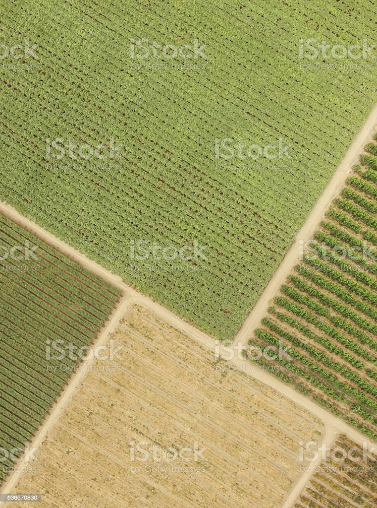 top view fields plantations stock photo