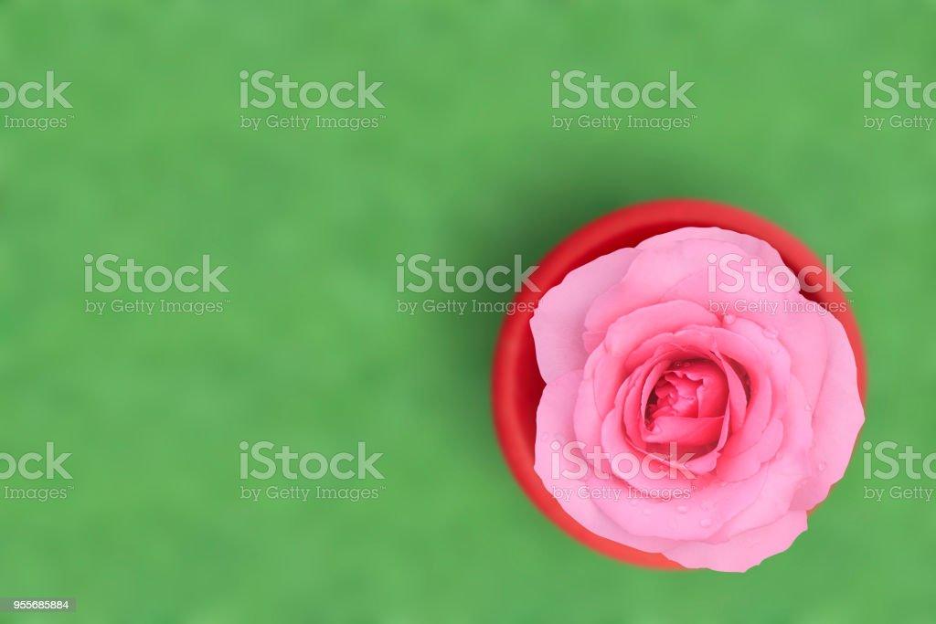 Vue De Dessus Frais Belle Rose Petale De Rose Et Larome Avec Goutte
