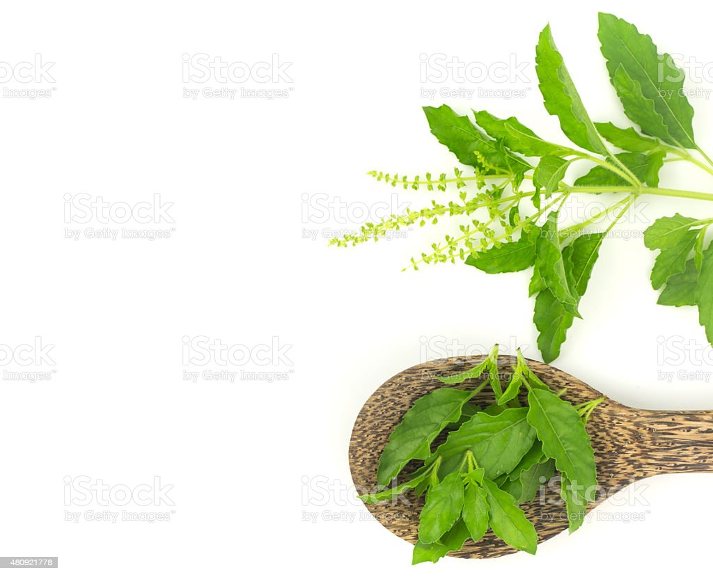 Top view - Fresh holy basil leaves on white​​​ foto