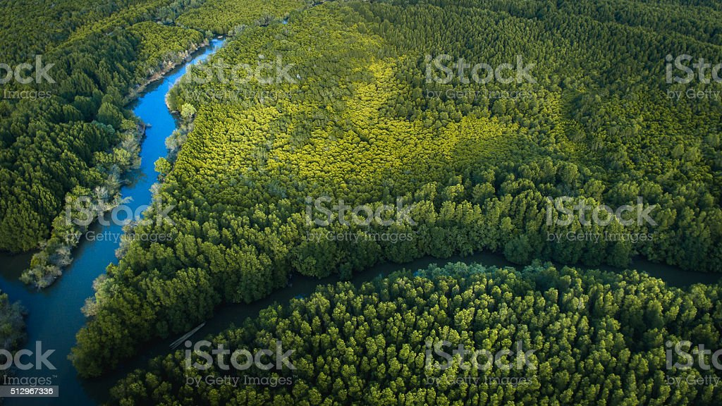 Top View Mangrove Forest stock photo