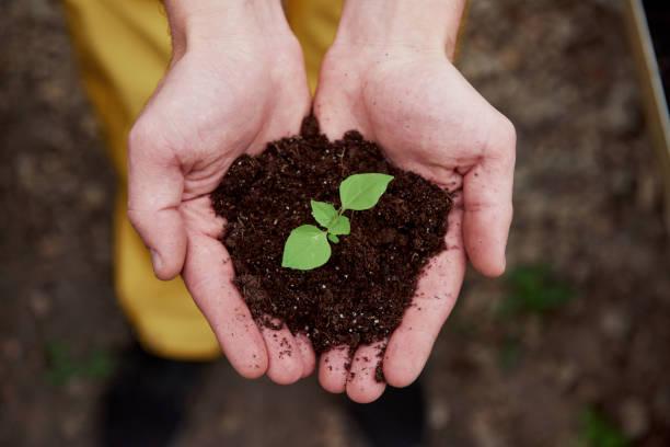 Top View. Die Hände der Mutter halten den Boden mit wenig Pflanze in der Mitte – Foto