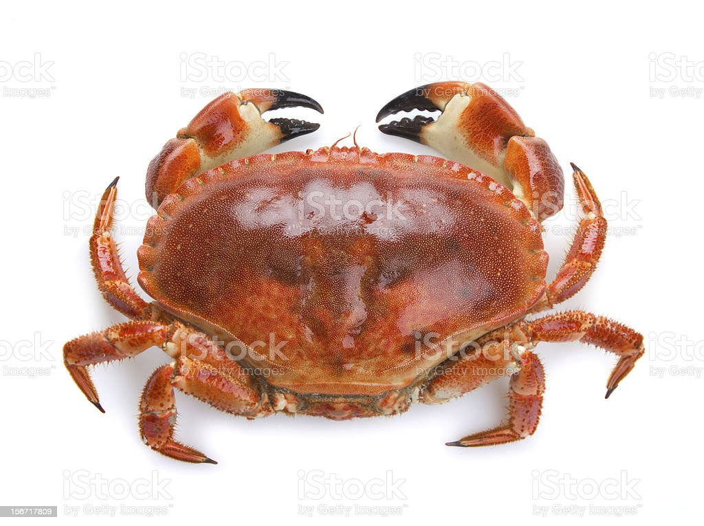 Top view of a boiled crab on a white background stock photo