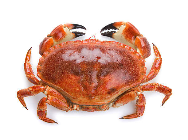 top view of a boiled crab on a white background - krab stockfoto's en -beelden
