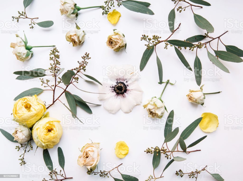 Top view of a eucalyptus branches and dry roses with anemone in the middle chaotically lying on the white background making a floral pattern stock photo