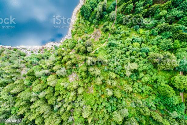 Photo of Top view of a forest at the lakeside of Lac Noir, a lake in the Vosges Mountains