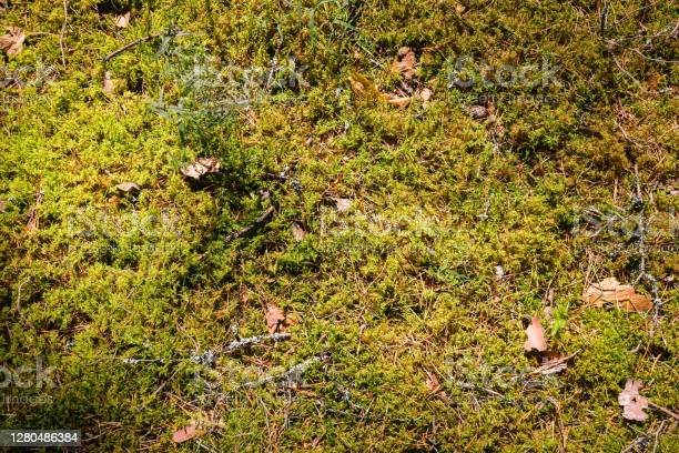 Photo of Top view of a moss ground Background, green forest floor. Natural, organic background.