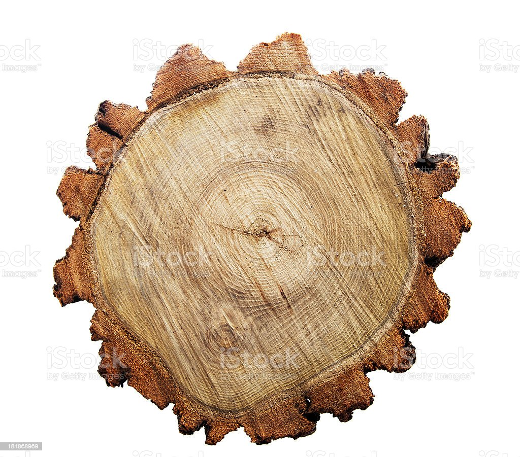 Top view of a tree stump royalty-free stock photo