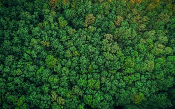topputsikt över en ung grön skog på våren eller sommaren - skog bildbanksfoton och bilder