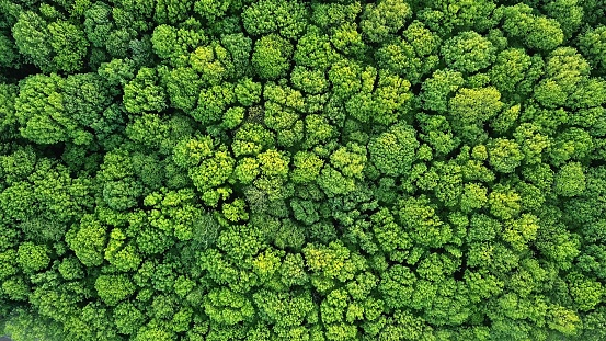 Top view of a young green forest in spring or summer