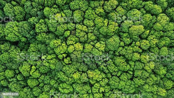 Top view of a young green forest in spring or summer picture id968853036?b=1&k=6&m=968853036&s=612x612&h=0hlwfmcdwzsahqyiuacrrsbrkam0awwkzxpw0y3k9su=