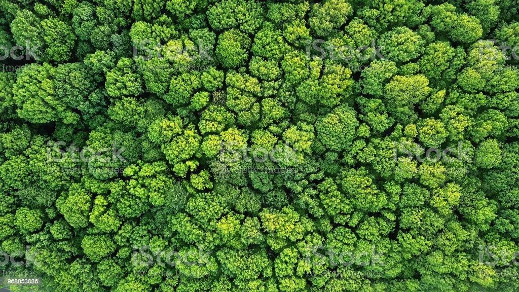 Draufsicht auf einen jungen grünen Wald im Frühling oder Sommer – Foto
