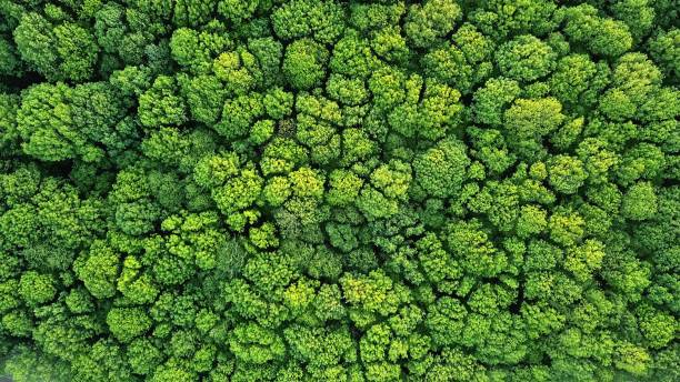 Top view of a young green forest in spring or summer Aerial view green forest foliage summer warm sunlight. Natural green background. Photo by drone forest stock pictures, royalty-free photos & images