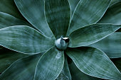 istock Top view of agave plant leaves 108196875