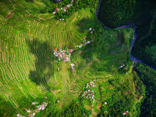 top view of batad rice terraces in northern luzon, philippines - baguio city stock photos and pictures