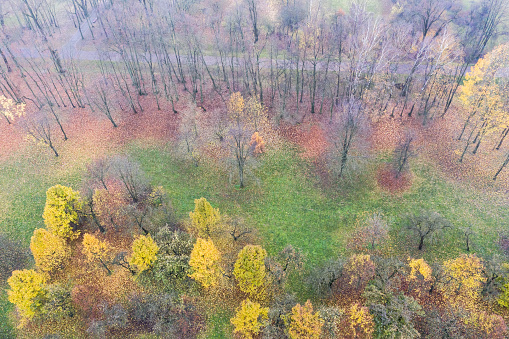 top view of beautiful autumn park trees with colorful bright foliage