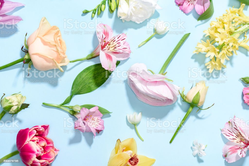 Top view of beautiful blooming flowers collection isolated on blue stock photo