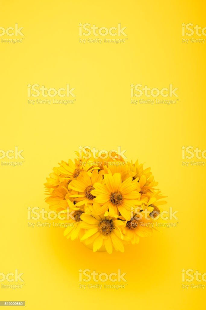 Top view of beautiful chrysanthemum flowers isolated on yellow stock photo