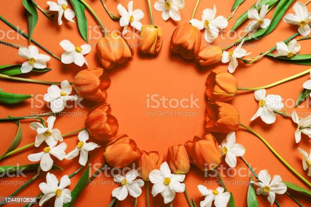 Top view of beautiful orange tulips and white daffodils circle frame picture id1244910836?b=1&k=6&m=1244910836&s=612x612&h=bjhoiknzyasroamx jjotbucusypeirxe65dtfrtima=