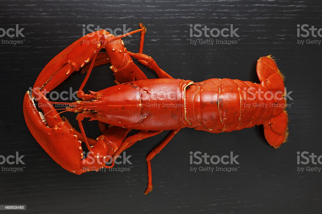 Top view of Boiled Atlantic Lobster stock photo