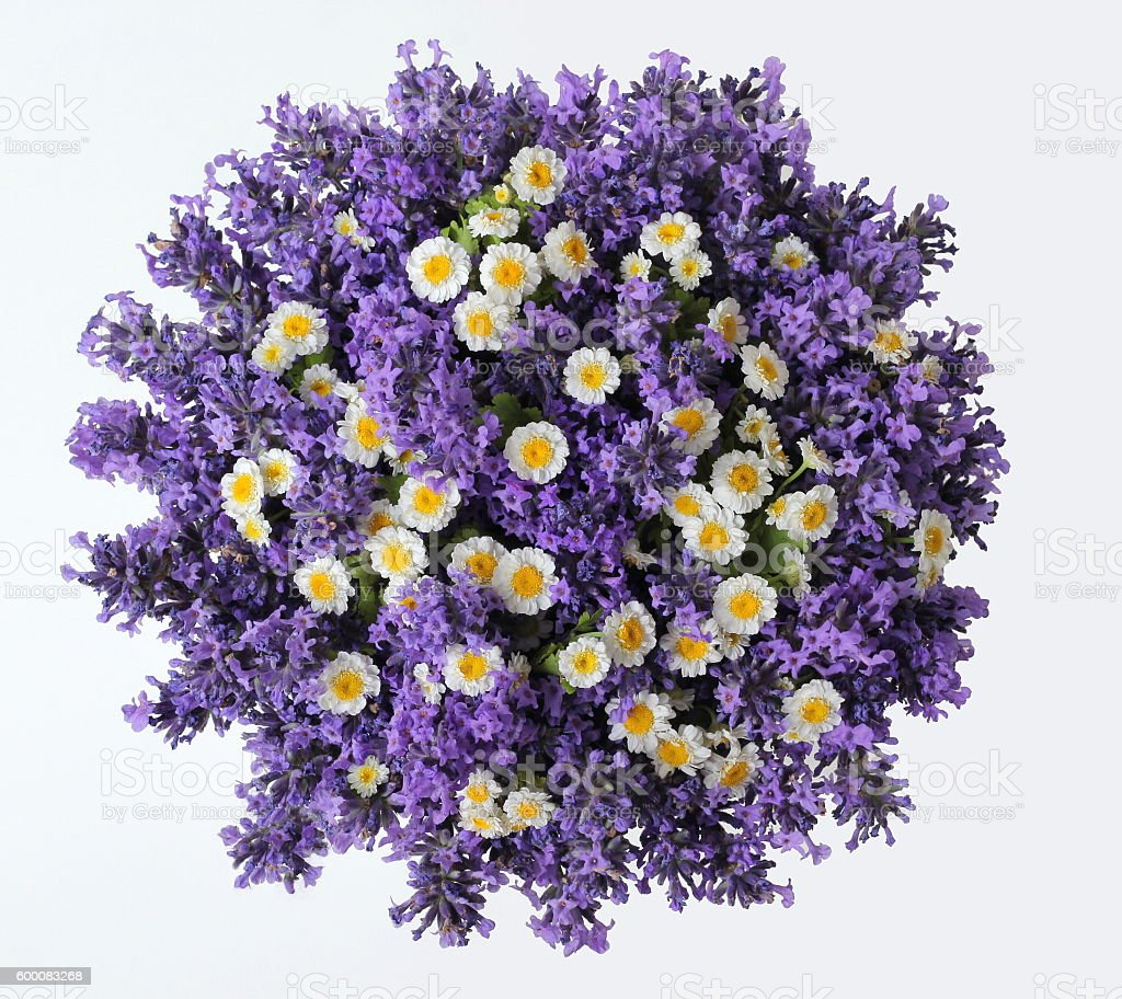 Top view of bouquet lavender and daisy flowers on white-background. stock photo
