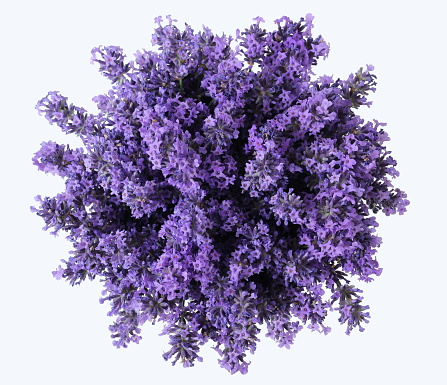 Top view of bouquet of lavender flowers on a white background. Bunch of purple lavandula flowers. Photo from above.