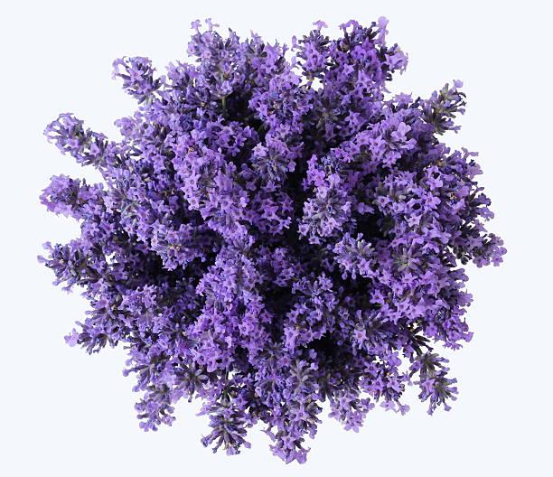top view of bouquet of purple lavender flowers. lavandula bunch. - lavendel stockfoto's en -beelden