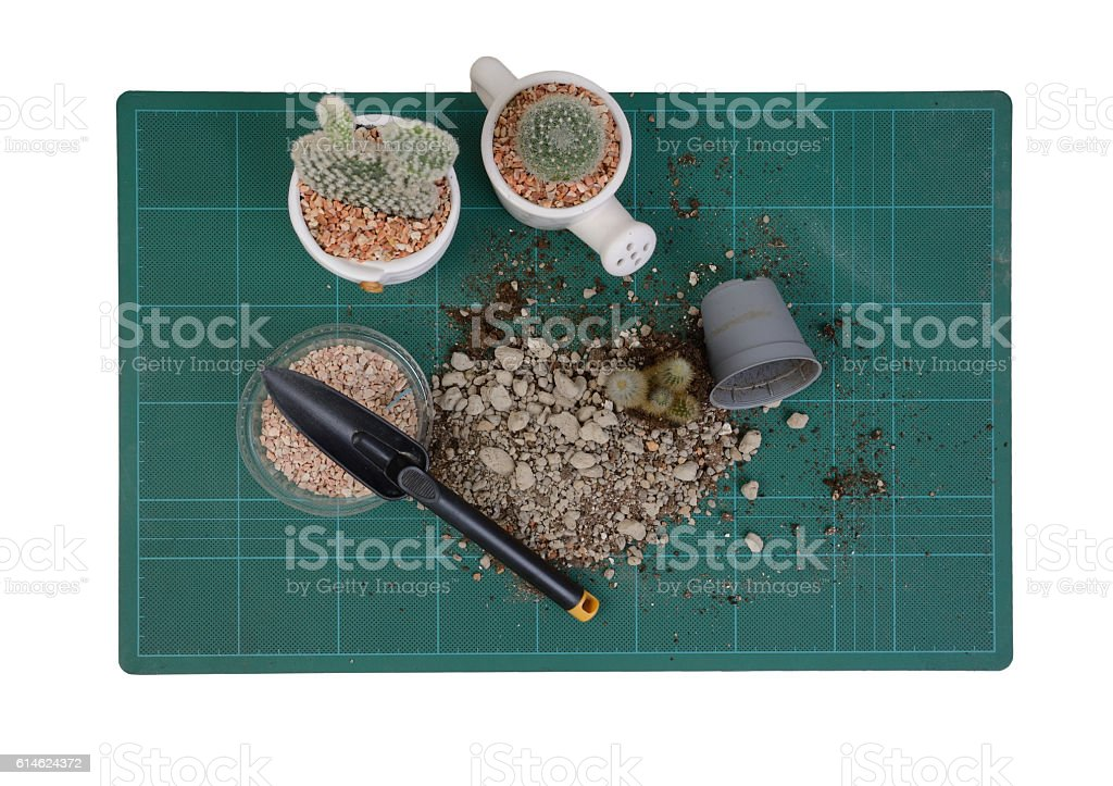 Top view of cactus and planting tools. stock photo