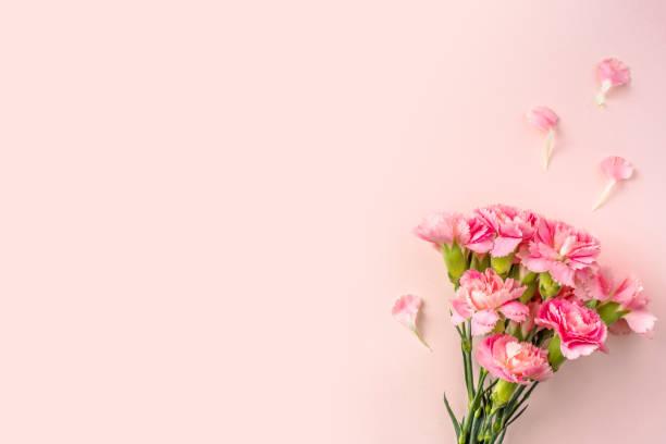 Blick auf die Nelke auf rosa zum Muttertag – Foto