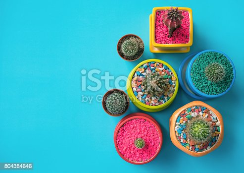 istock Top view of colorful cactus 804384646