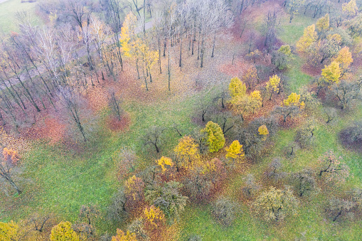 top view of colorful park trees in the autumn season