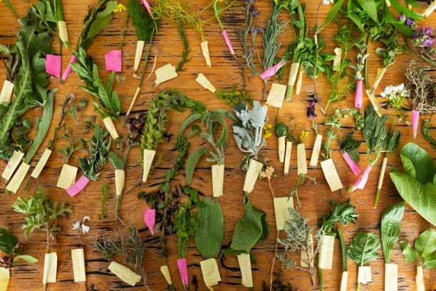 Blick auf geschnittene Blumenblumen in einer Reihe und Pflanzen auf Holzhintergrund – Foto