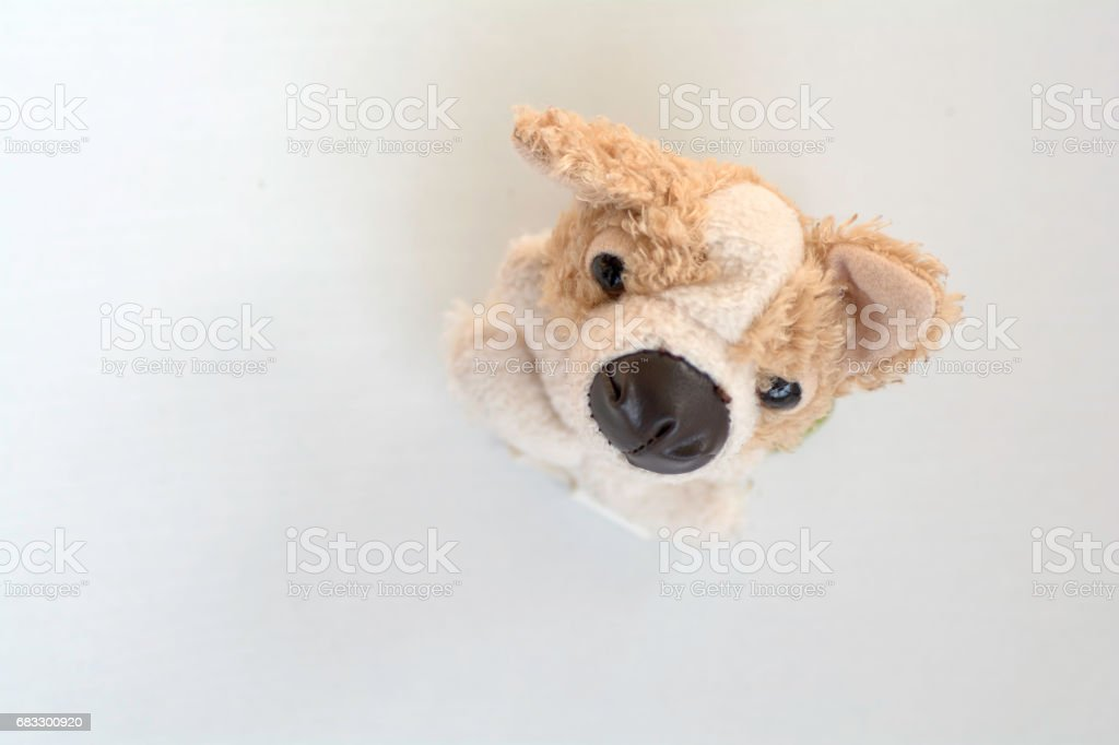 Top view of dog doll foto de stock libre de derechos