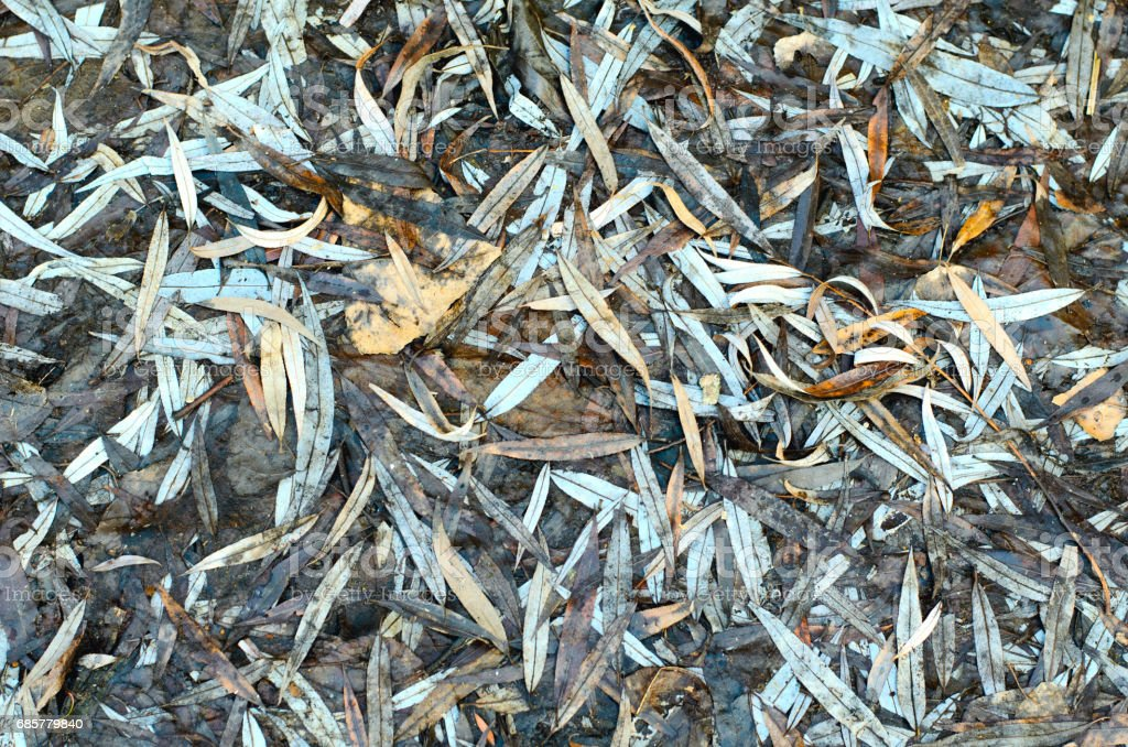 Top view of fallen rotten autumn brown leaves on the ground royalty-free stock photo