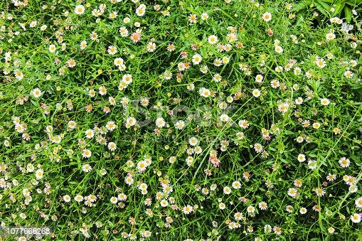 Top view of flowers background in garden