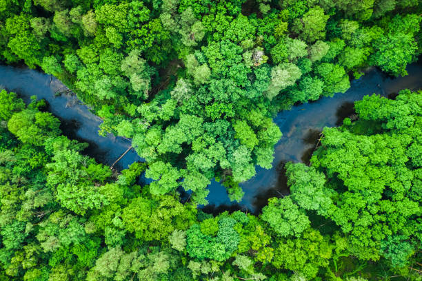 Top view of forest and river in Tuchola national park stock photo