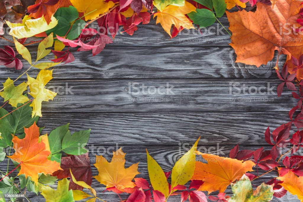 top view of frame of colored autumnal maple leaves on wooden surface