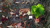 Fall aesthetics. Autumn textures. Seasonal backgrounds. Natural backdrop.