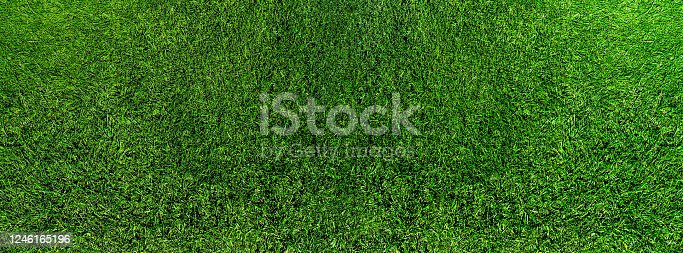 wide directly above shot of fresh green grass or lawn, lush grass background