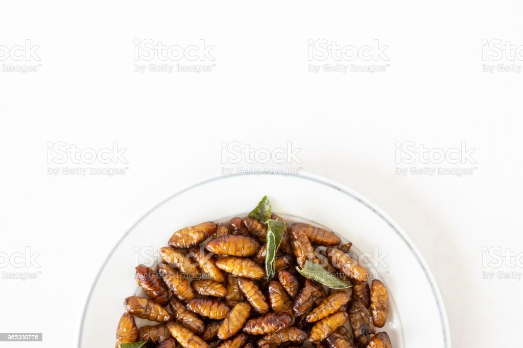 Top view of Fried insects in dish on white background. copy space royalty-free stock photo