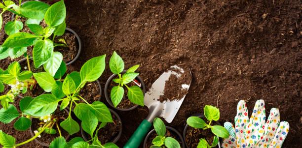 Top Blick auf Gartengeräte und Setzlinge auf dem Boden – Foto