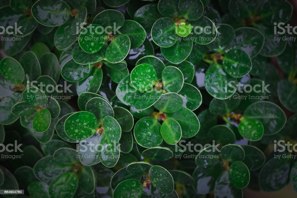 top view of green leaf with rain drop in dark tone foto stock royalty-free