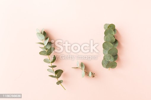 istock Top view of green leaves eucalyptus on pink background. flat lay 1156266636