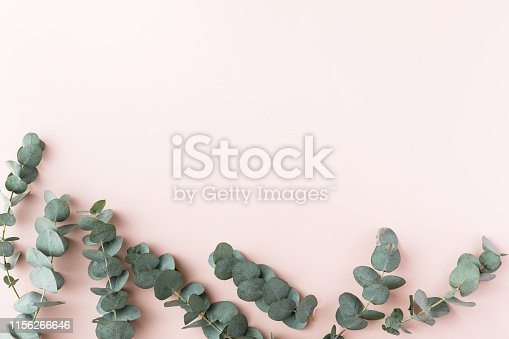 istock Top view of green leaves eucalyptus on pink background. flat lay 1156266646