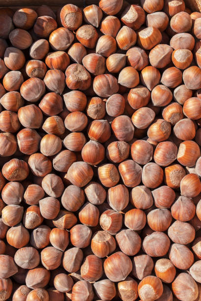Top view of hazelnut - foto stock