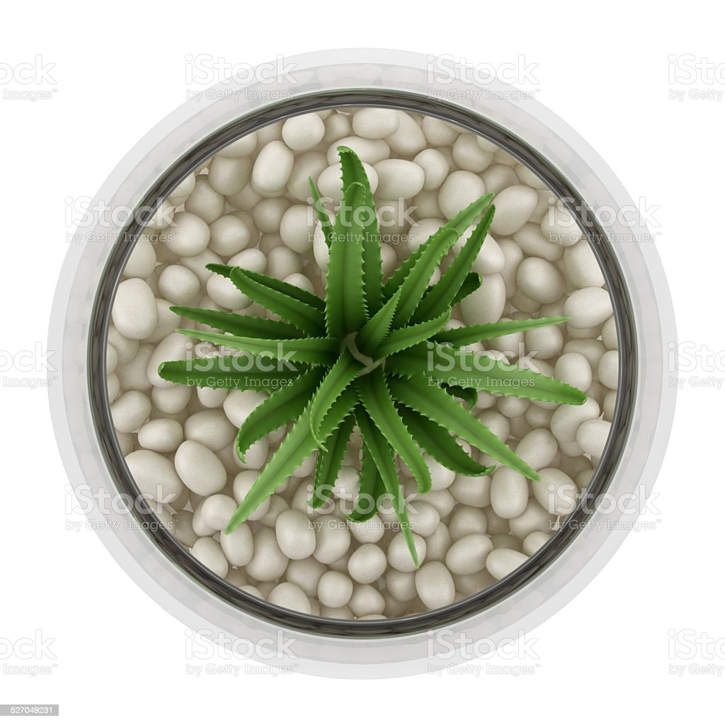 Top view of houseplant in glass vase isolated on white stock photo top view of houseplant in glass vase isolated on white royalty free stock photo reviewsmspy